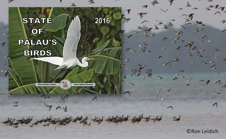 New book highlights new endemic Palauan birds and migratory bird species